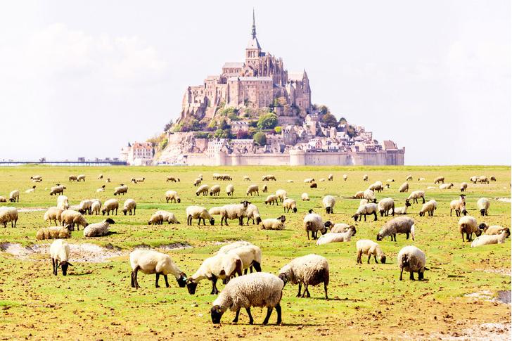 Фото №1 - Исторический пейзаж