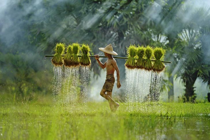 Фото №1 - Один кадр: Таиланд