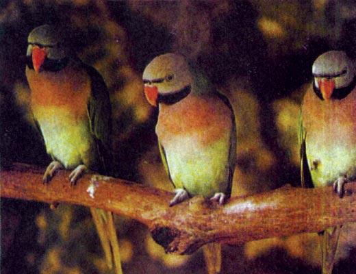 Фото №1 - Птичий бизнес