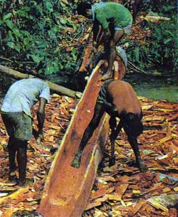 Фото №4 - Возвращение в дождевой лес
