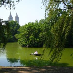 Фото №1 - В Нью-Йорке клонируют деревья