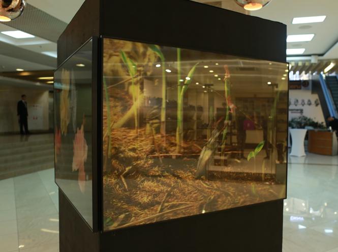 Фото №2 - Арт-проект «Лабиринт Сознания» в галерее Неглинная