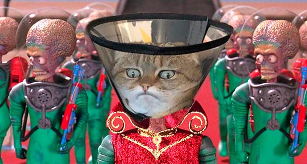Фото №3 - Лучше фотожабы на кота в защитном воротнике
