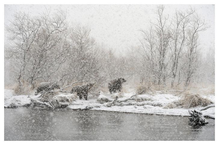 Фото №5 - Лесные истории