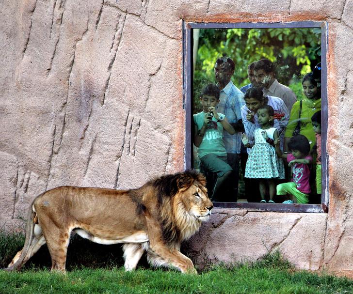 Фото №11 - Детки вне клетки: 12 лучших зоопарков мира
