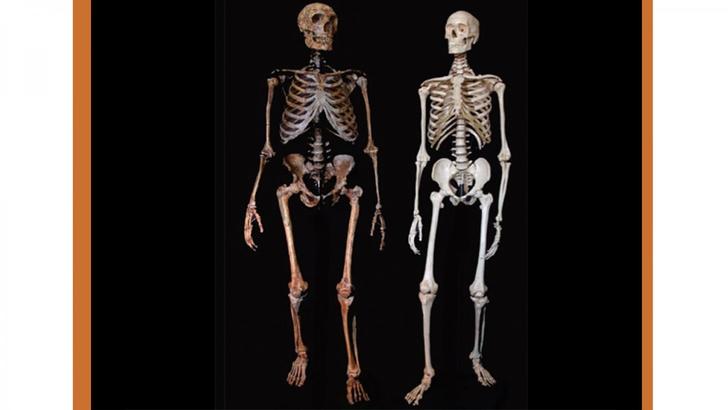 Фото №1 - Названо «секретное оружие» Homo sapiens