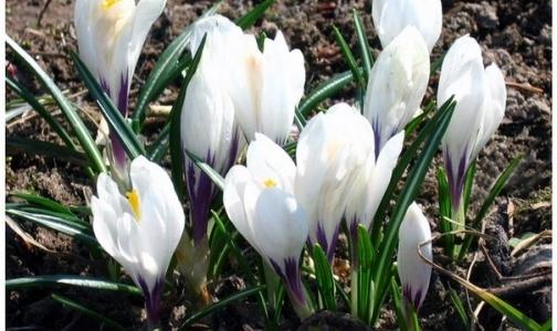 Фото №1 - «Белый цветок» поможет тяжелобольным петербургским детям