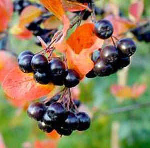 Фото №1 - Темноокрашенные овощи лечат рак кишечника