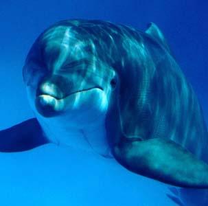 Фото №1 - Дельфинов тоже можно понять