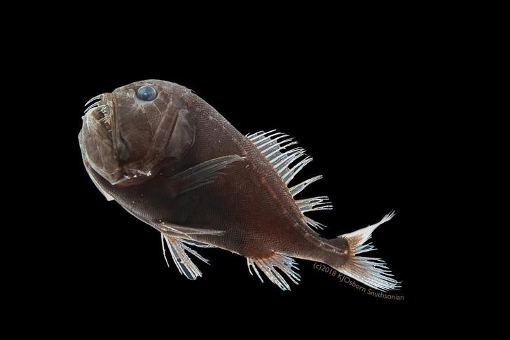 Фото №1 - Ученые обнаружили «невидимых» рыб