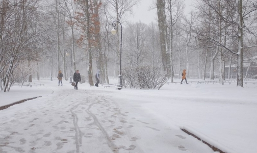 Фото №1 - Восемь петербуржцев пострадали от клещей на территории города