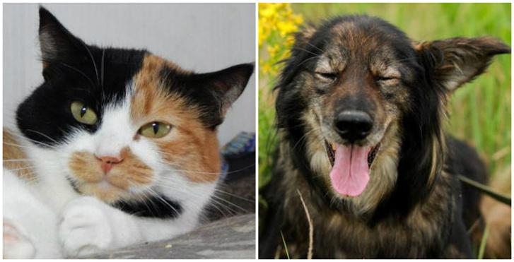 Фото №1 - Котопёс недели: пёс Шеги и кошка Олли