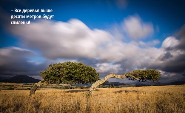 Фото №10 - Мистраль, сирокко и еще пять знаменитых ветров