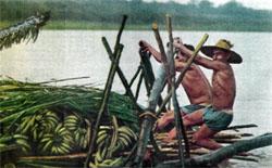 Фото №4 - По Амазонке вверх