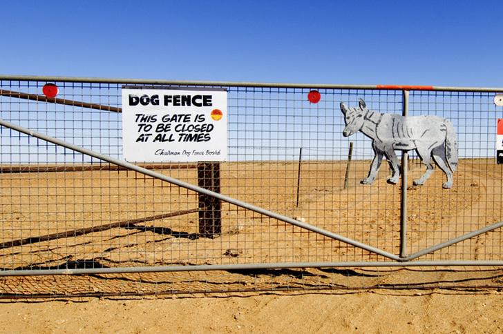 Фото №8 - Собаки с волчьим билетом