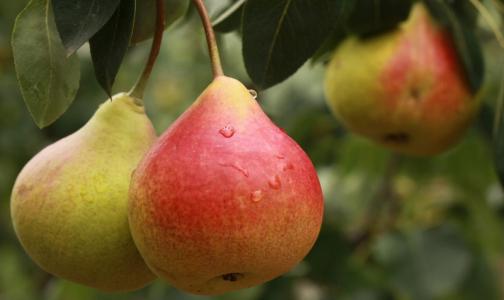 Фото №1 - Диетолог назвал самый полезный фрукт для здоровья кишечника