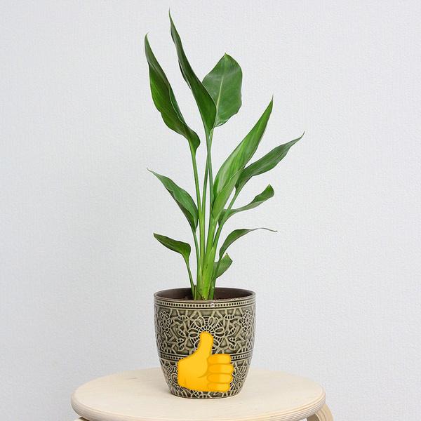 Фото №3 - Все, что нужно знать о пересадке комнатных растений