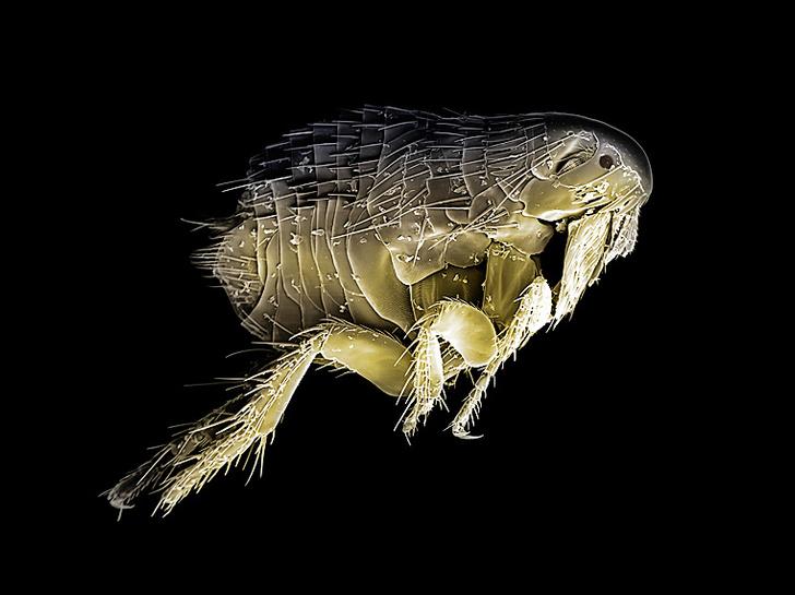 Фото №3 - Робот-блоха, чипсы из медуз и другие открытия месяца