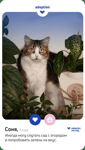 Фото №5 - Любовь в один клик: что такое pet-дейтинг, и как он поможет найти идеального питомца