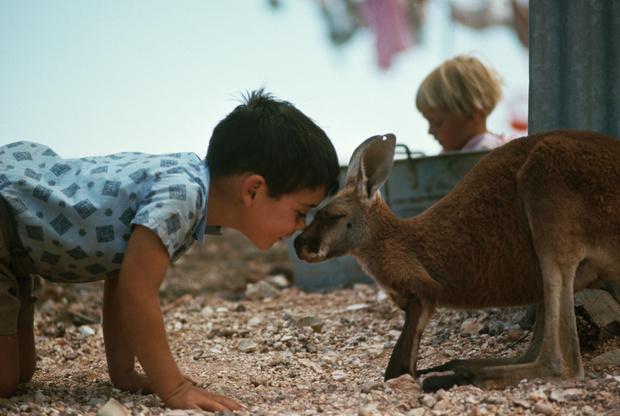 Фото №8 - В мире животных: самые известные и жуткие истории детей-маугли, которых воспитывали звери, а не люди
