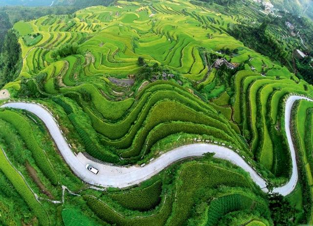 Фото №1 - Китай. Пейзаж, созданный ради риса