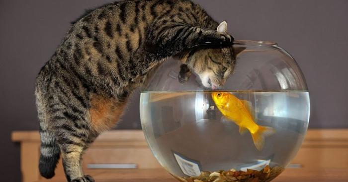 Фото №13 - 20 мемных котов, похожих на известных режиссеров