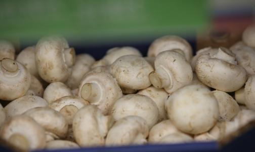 Фото №1 - В 2016 году Роспотребнадзор забраковал 200 кг грибов