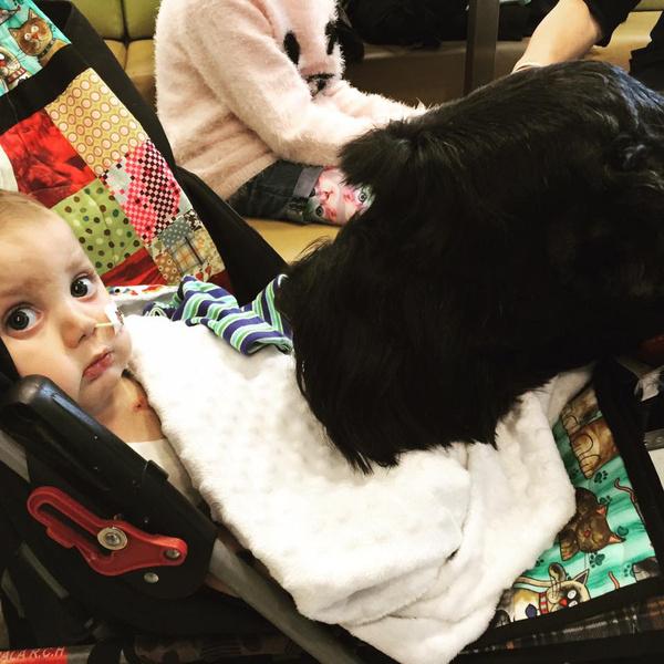 Фото №2 - Лучше, чем врач: пес-доктор помогает тяжелобольным малышам