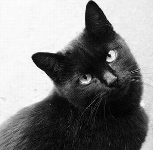 Фото №1 - В Италии появится День защиты черных кошек