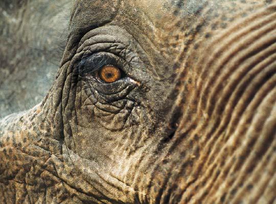 Фото №1 - Ход слоном