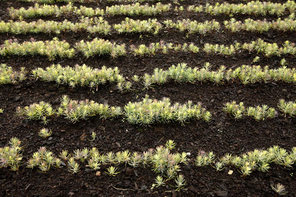 Фото №6 - Парфюмер в трех миллионах сосен