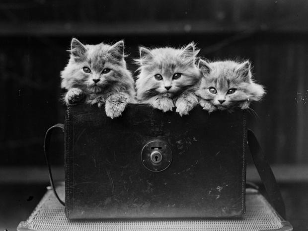 Фото №1 - Кошки, изменившие мир: 8 удивительных историй