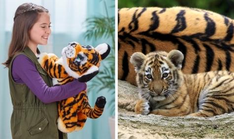 Фото №2 - Новая игрушка от Hasbro «Рычащий амурчик» – на защите амурского тигра!