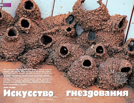 Фото №1 - Искусство гнездования
