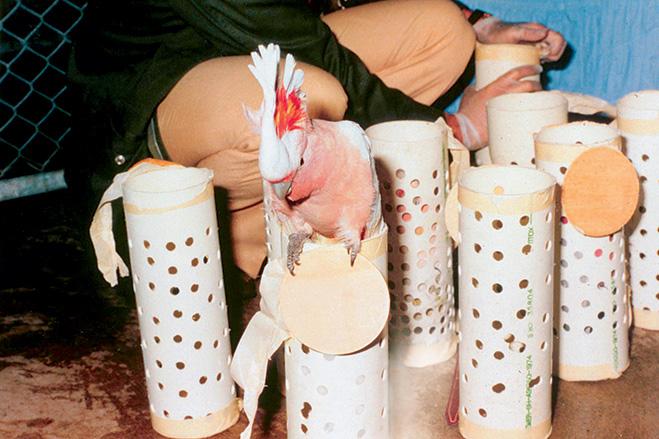 Фото №2 - Таможня отбирает добро: 12 провалов контрабандистов