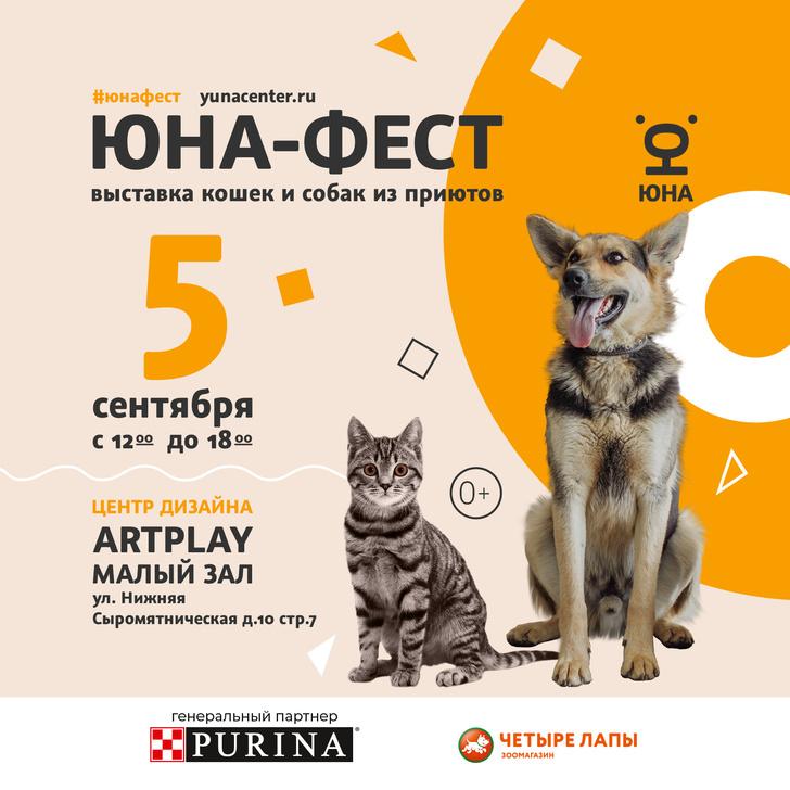 Фото №1 - 5 сентября в Москве состоится выставка-пристройство собак и кошек из приютов «Юна-фест»