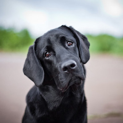 Фото №1 - Собачья дружба