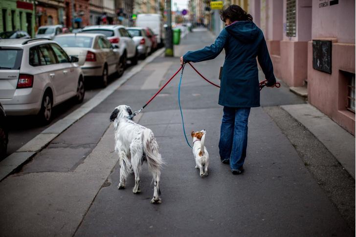Фото №1 - Как собаки влияют на продолжительность жизни