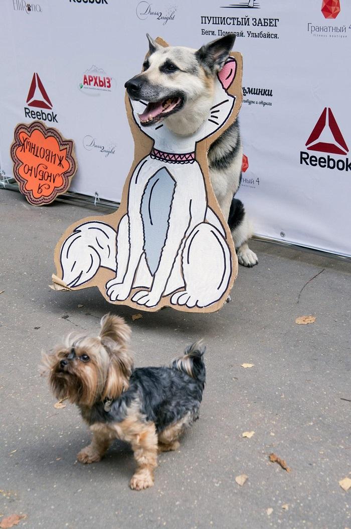 Фото №1 - «Пушистый забег»: в Москве пройдёт самый милый марафон