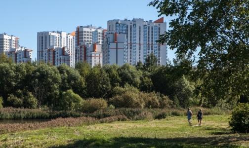 Фото №1 - В Петербурге зарегистрированы первые случаи клещевого энцефалита
