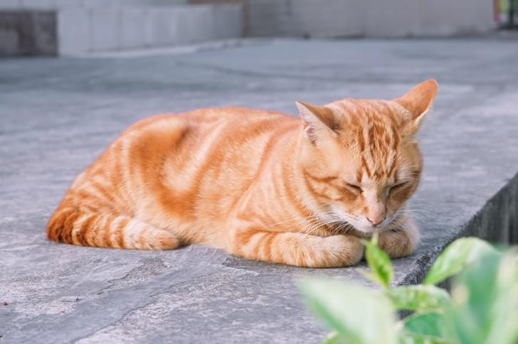 Фото №4 - Что значит поза, в которой спит твоя кошка (7 поз)