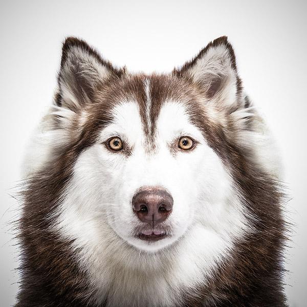 Фото №1 - Собачий взгляд