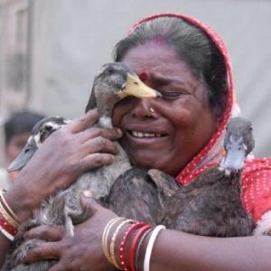 Фото №1 - Жертвы птичьего гриппа