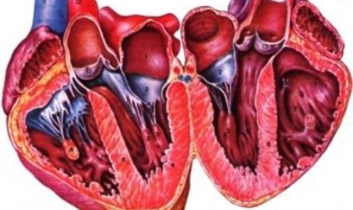Фото №1 - Сердце способно к регенерации