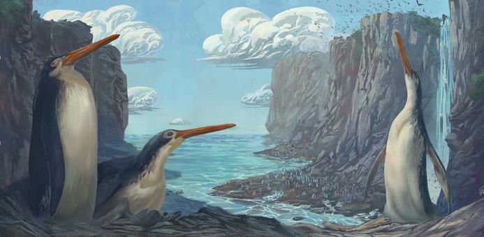 Фото №1 - В Новой Зеландии школьники обнаружили останки гигантского древнего пингвина
