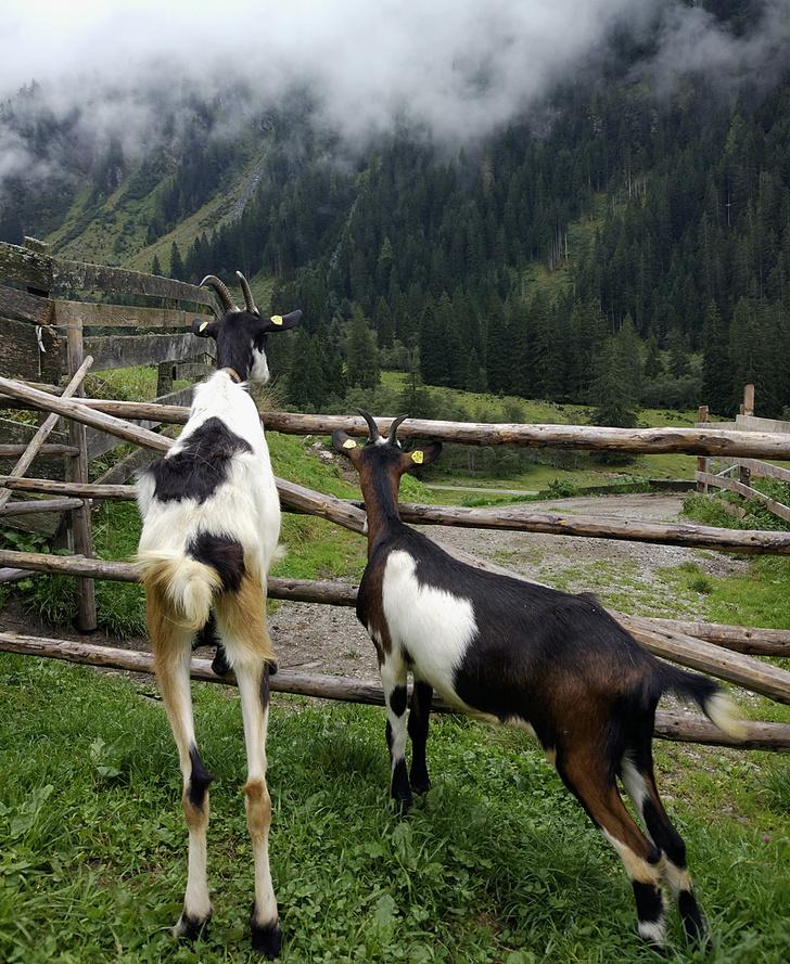 Фото №10 - Местные жители: в горах мое сердце