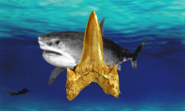 Фото №1 - Обнаружены останки нового вида вымерших акул