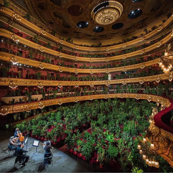 Фото №1 - В Барселоне устроили концерт для растений