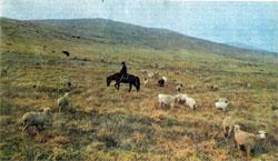 Фото №2 - Сокровища Черных гор