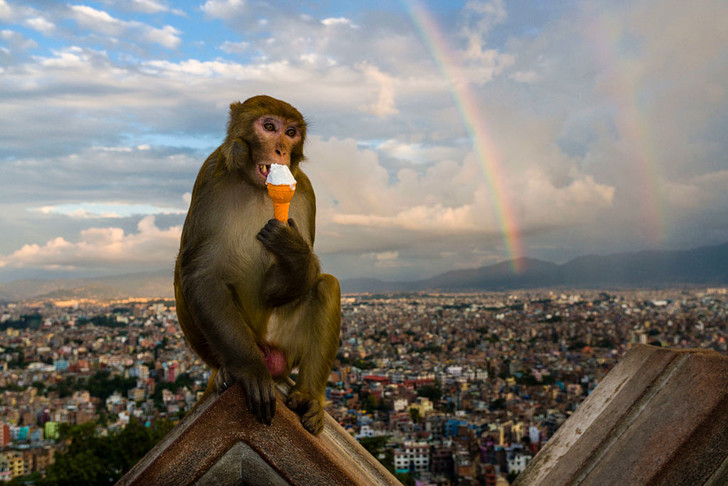 Фото №1 - Кто из приматов спит меньше всего
